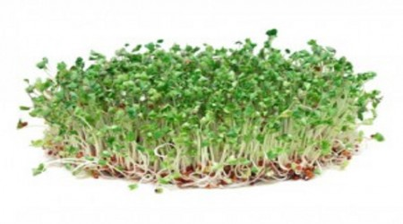 Broccoli Sprouts - What are the Benefits?