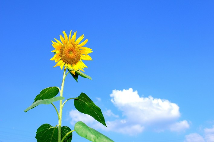 Tips For Boosting Energy During the Summer