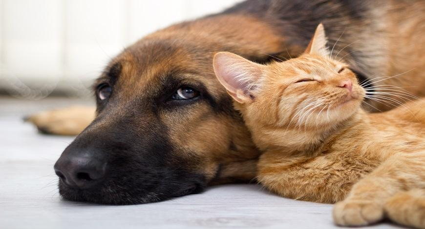 How to Help Your Pet Age Gracefully the Natural Way