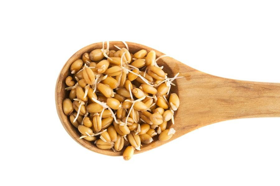 The Superior Alkalinity, Digestibility, and Nutritiousness of Sprouted Grains