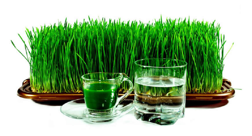 Should Liquid Chlorophyll Be Added To Your New Years Supplement Regime?
