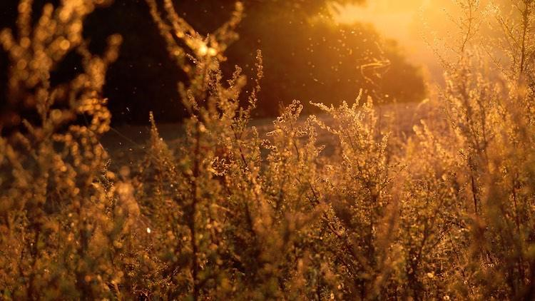 Probiotics for Hay Fever: Do They Help?