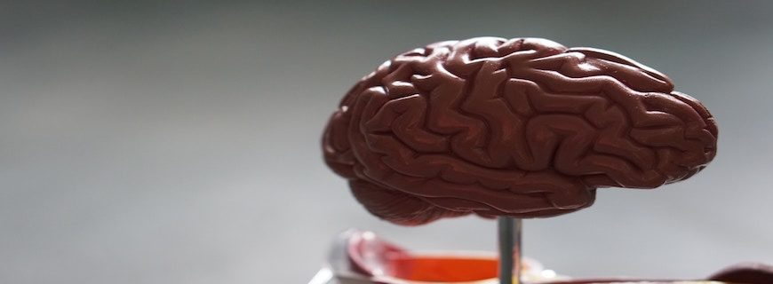 15 Proven Ways to Increase Your Brain's Growth Hormones
