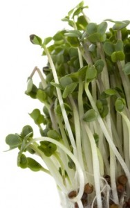 broccoli sprout supplement